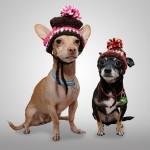 Rabatt für mehrere Hunde bei der Hundehaftpflicht