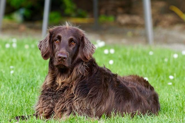 Bild Hundehaftpflicht: Hund liegt im Gras