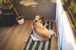 Hundehaftpflicht Versicherungen vergleichen