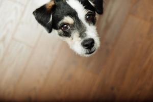 Hundehaftpflicht Versicherung für Hundehalter empfehlenswert