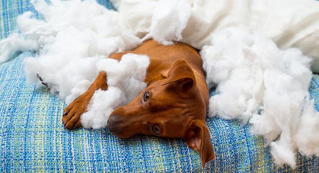 Hundehaftpflichtversicherung Vergleich & Testsieger