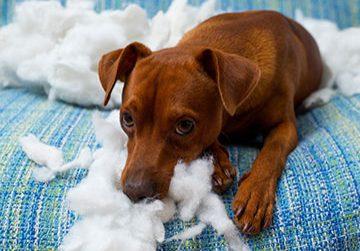 Hundehaftpflichtversicherung sinnvoll? - Vergleich & Testsieger